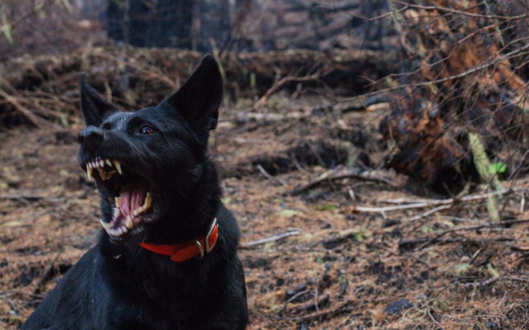 Toename bijtincidenten met honden